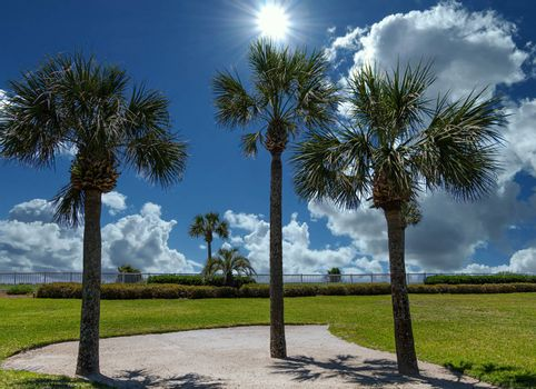 Three Palm Trees in the property of a beach condo