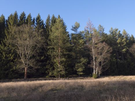 Late autumn or early winter landscape with dry grass meadow and bare trees and spruce tree. forest and Blue sky background. Rural landscape in countryside. Sunny day. Copy space.