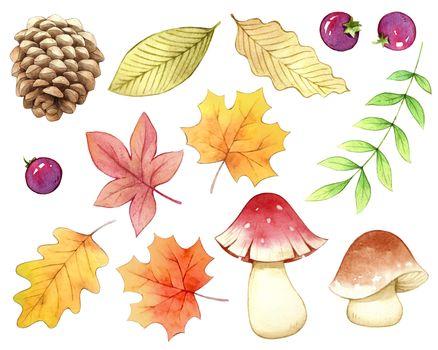 Accessory autumn nature watercolor