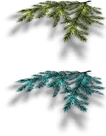 Blue and green Christmas tree branches on an isolated white background with the shadow in perspective. Vector illustration