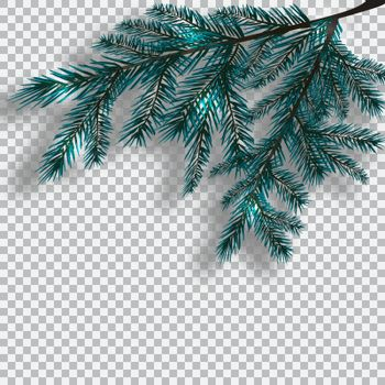 Two blue realistic branch of tree on background checker. Fir branches located in the corner with a shadow. Christmas vector illustration