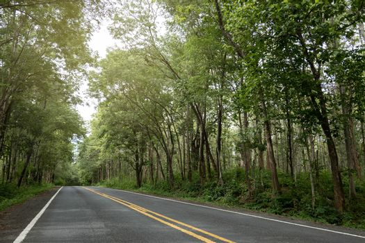 Empty asphalt road heading to the green forest.