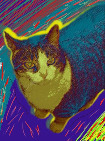 Modern art. Colorful cat