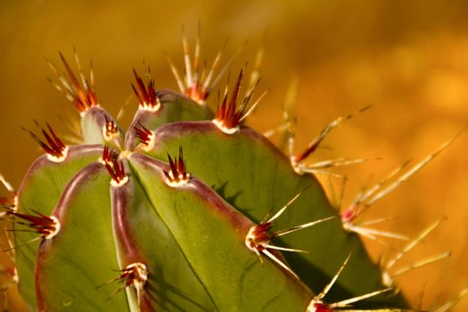close-up image of cactus plant with red thorns