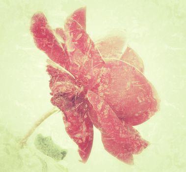 rose in vintage look