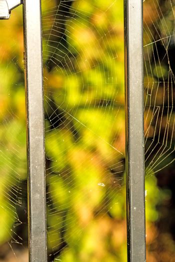 Spider web at a fence