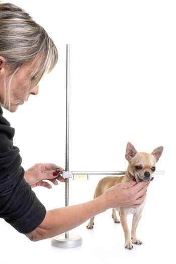 measuring rod for dog in front of white background