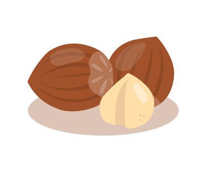 Hazelnut nuts isolated on white background.
