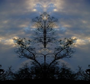Surreal trees