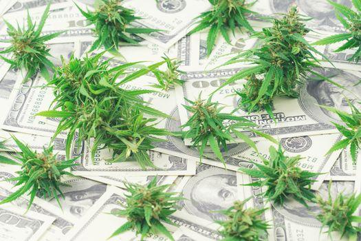 marijuana on dollar bill