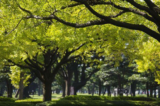 Japan Tokyo Marunouchi business district park
