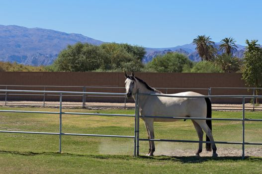 Horse confined in ranch