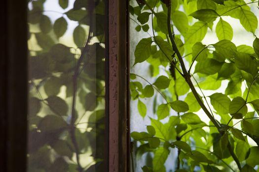 Plant outside window