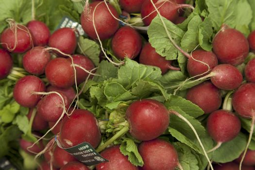 Close-up of raw radish on display in market