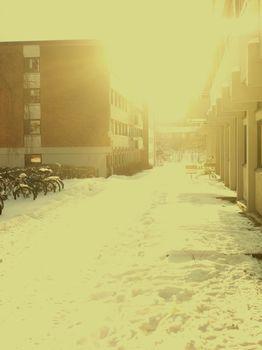 Monochrome winter view