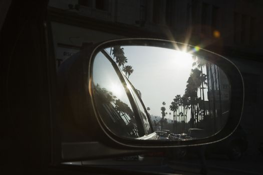 Reflection of palm trees in car mirror