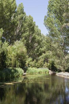 Peaceful scene of lake and trees