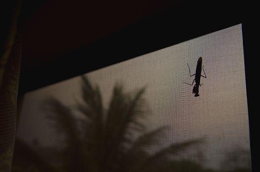 Large Bug on Window Screen at Night