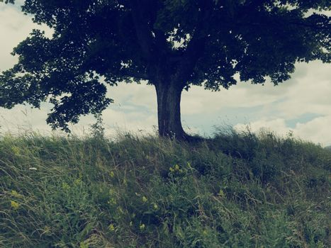 Tree on grassy hill