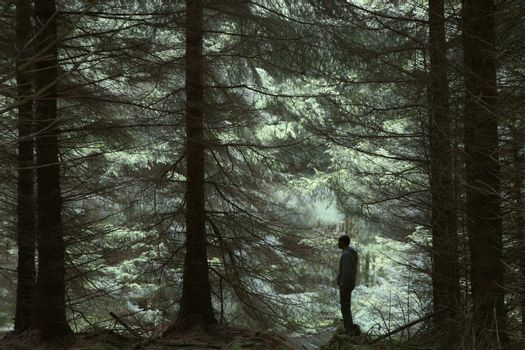 Silhouette of man standing in forest