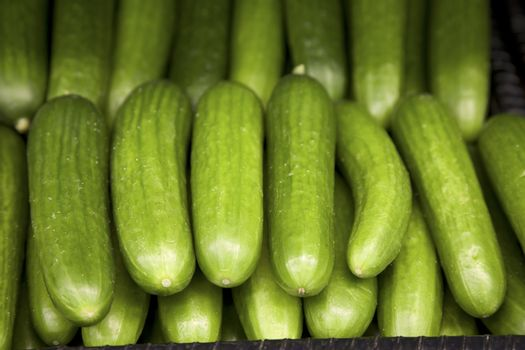 Close-up of cucumber on display in market