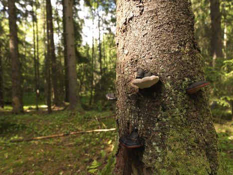 Tree with fungi