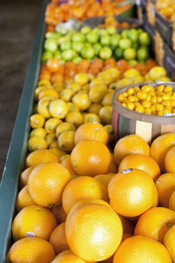 Close-up of oranges on display in market