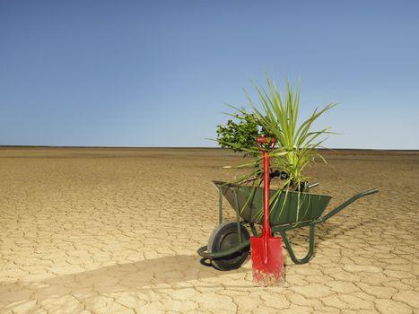 Wheelbarrow full of plants next to spade in desert