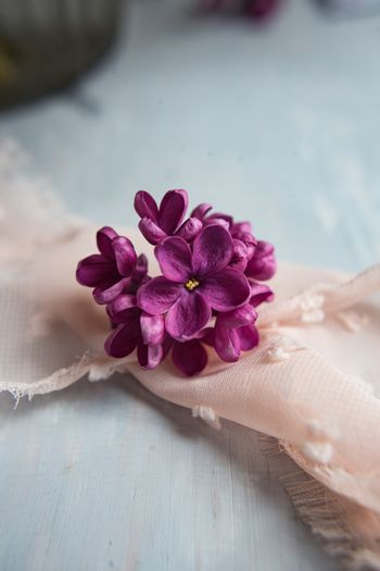 Lilac violet flowers on a white ostrich feather. A lilac luck - flower with five petals among the four-pointed flowers of bright pink lilac (Syringa) The magic of lilac flowers with five petals.