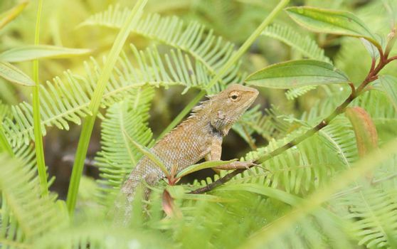 Light brown chameleon in a green forest