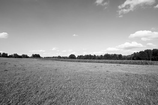 Deserted fields of Germany in black and white. Maize plantation in southern Bavaria.