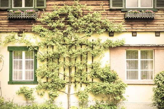 Facade of the building in Austria, decorated with flowers and trees. Traditional Austrian House in Hallstatt on a rainy day. Vintage style