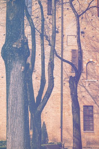 Whimsical shade of trees in the courtyard of the Duke of Gonzaga's palace in Mantua in faded color effect.