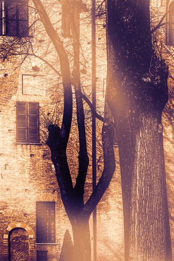 Whimsical shade of trees in the courtyard of the Duke of Gonzaga's palace in Mantua at dawn in a contemporary style.