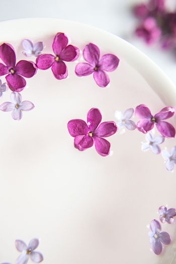 Five-pointed lilac flower among lilac flowers in a cup with water. Moke up space for text. Lilac branch with a flower with 5 petals.