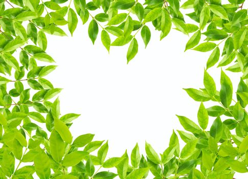 Green leaves in heart shape on white background, environment concept.