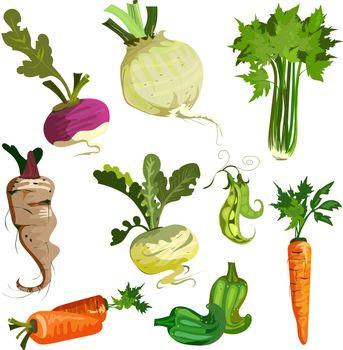 Vegetables from garden set