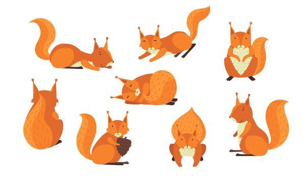 Cute red furry squirrel set