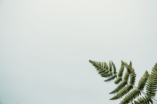 A minimalist background with a fern on the corner
