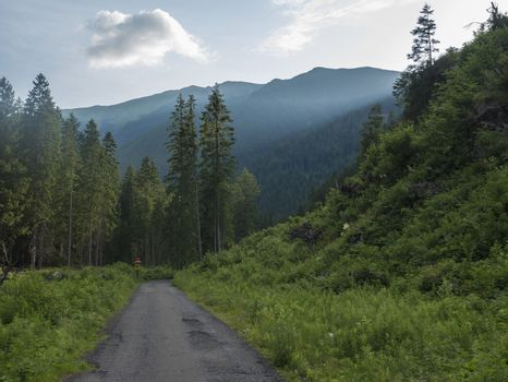 Footpath asphalt road from Ziarska dolina, beautiful nature with lush green grass, spruce trees and blue montain peaks. Western Tatras mountains, Rohace Slovakia, summer sunny day, blue sky background.
