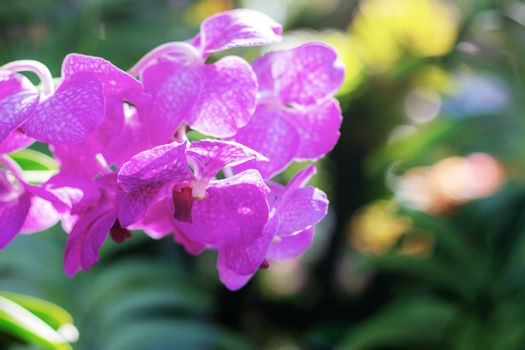 Purple orchid on plantaion with blur background.