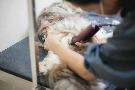 Woman are cutting hair a cat on table in pet shop.