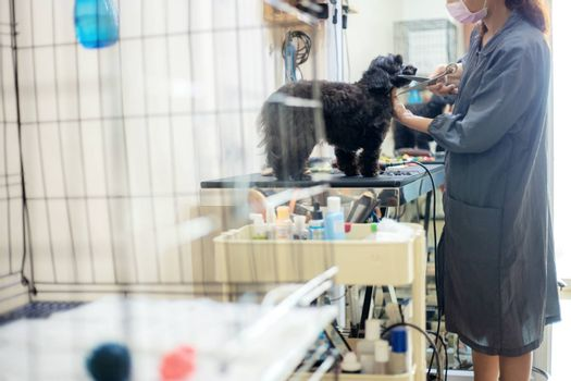 Woman are cutting hair and cleaning a dog in pet store.