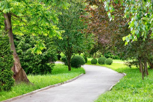 A winding asphalt road for pedestrians goes through a picturesque green summer park with soft sunlight, and on the side of the road there are many beautiful decorative bushes with round shape and trees.