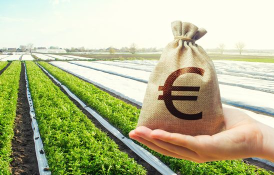 A hand holds out a euro money bag on a background of potato plantation farm fields. Lending farmers for purchase land and seed material, modernization. Support and subsidies. Farm loans