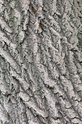 Embossed highly detailed old oak tree bark texture with weathered surfaces and cracks on it, vertical image, close up.