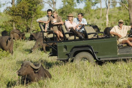 Group of tourists in jeep looking at African buffaloes (Syncerus caffer)