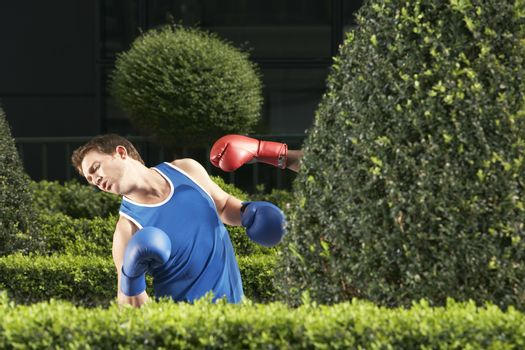 Two boxers fighting in park