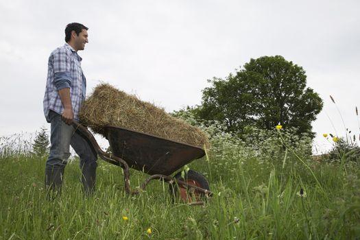 Man transporting hay in wheelbarrow in field
