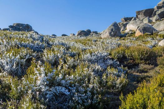 landscape covered by bushes with ice on the north of Portugal, Pitoes das Junias. Portuguese National park of Geres